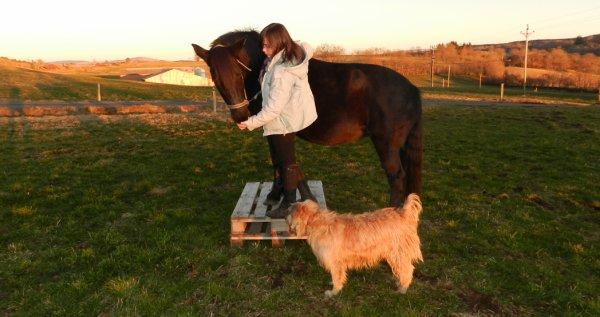 """"""" L'air du paradis est celui qui souffe entre les oreilles d'un cheval """" Proverbe arabe"""
