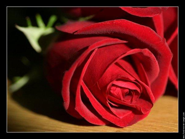 une belle rose avec des belles coeurs