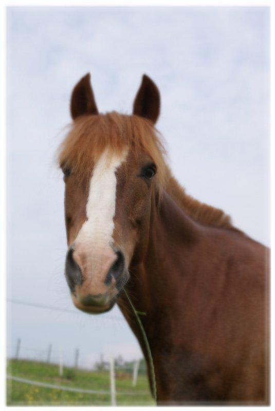 Homage au plus Merveilleux poney du Monde... ♥