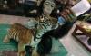 la femelle singe donne le biberon !