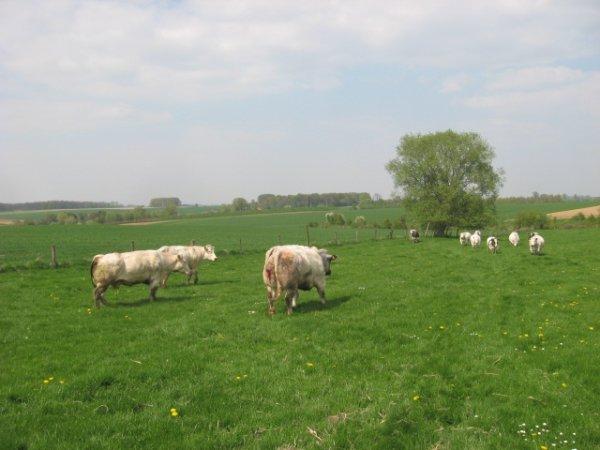mise en prairie des bêtes