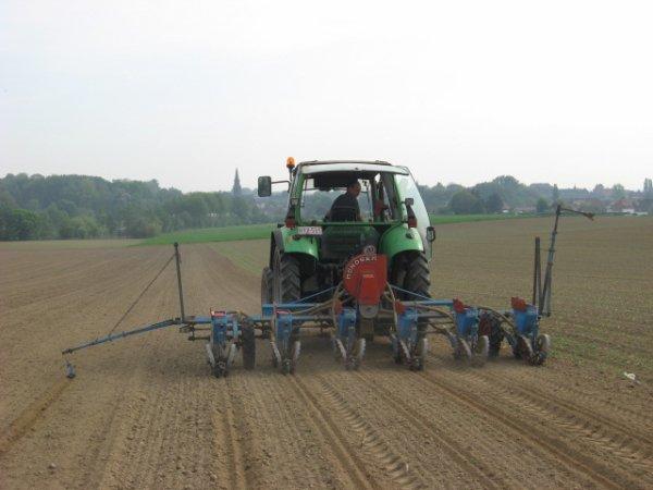 plantation du maïs