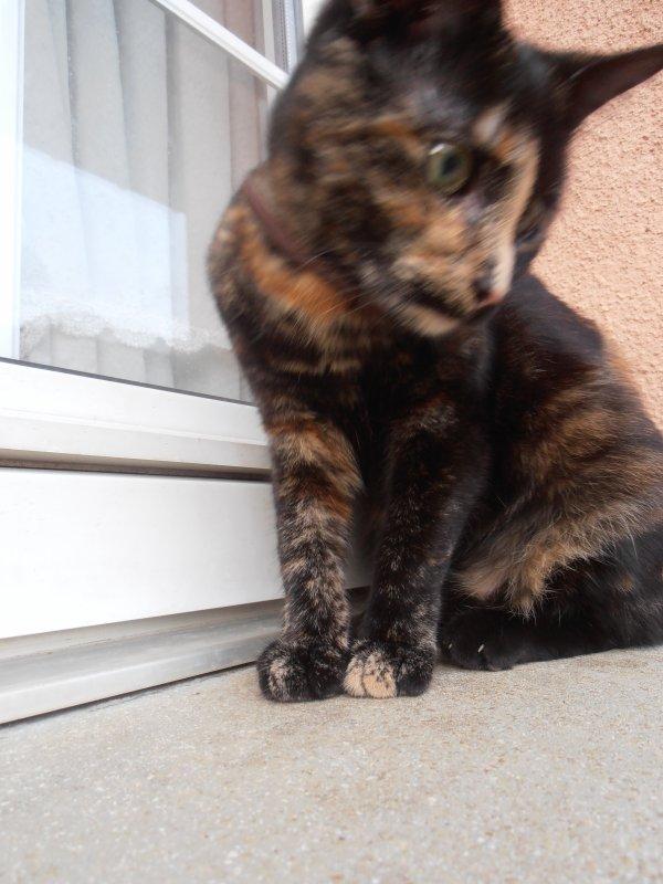 Voici un autre de mes chats : Ma Ptite Princesse ^^