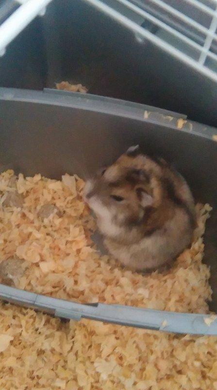 Mon nouvelle hamster !!!!