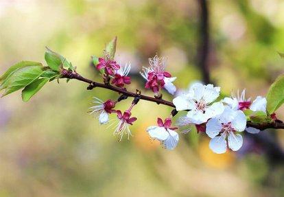 ....Tu es mon printemps.....