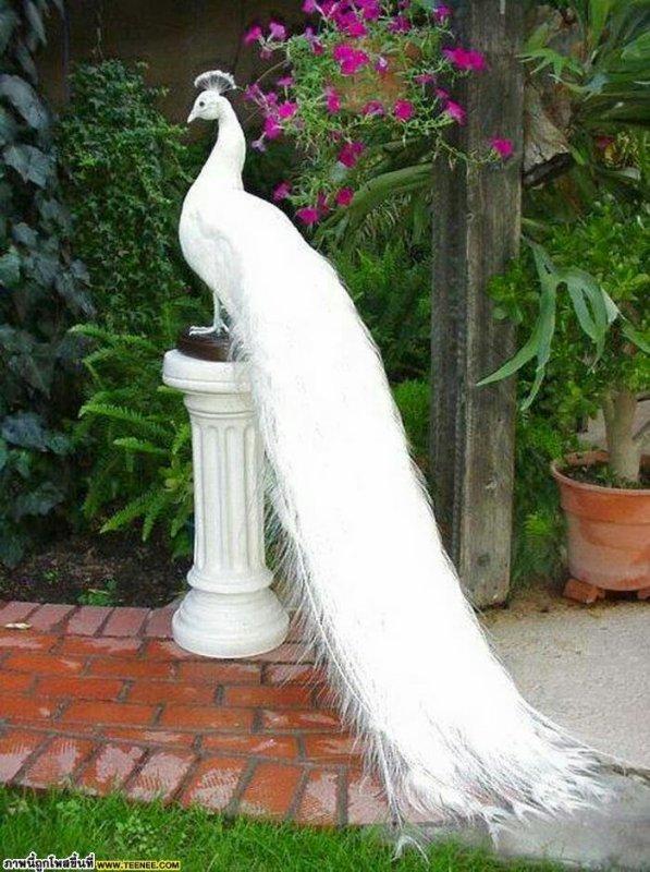 Comme dans un rêve - à un charmant oiseau du Nord-