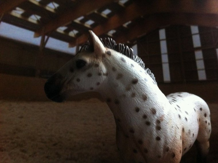 un cheval en moins....