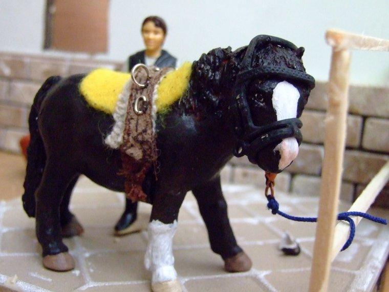 un nouveau poney