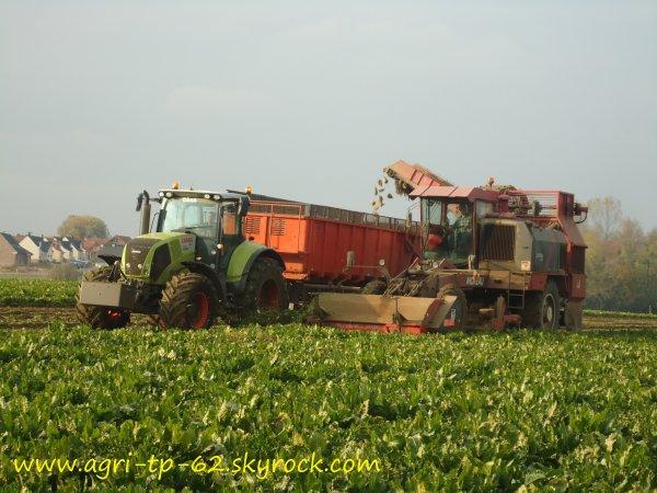 Arrachage des betteraves et semis de blé 2011