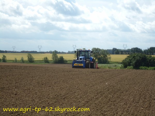 Semis d'haricots verts 2012
