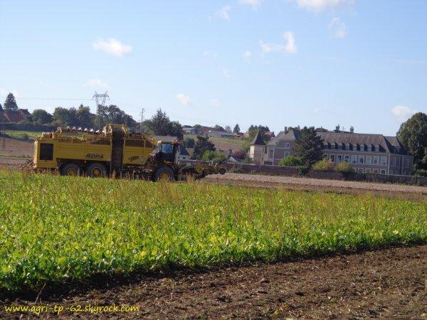 Arrachage des betteraves 2012