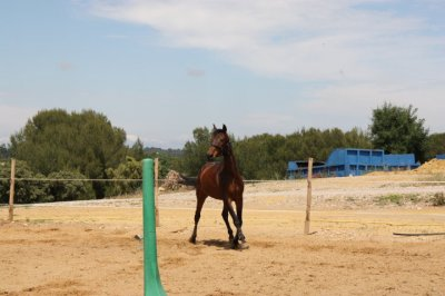 Des blogs, il y en a des millions. Mais celui-ci est unique, car il ne parle pas d'un cheval. Naan il parle de mon cheval !