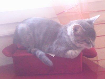 FLY  sur son canapé