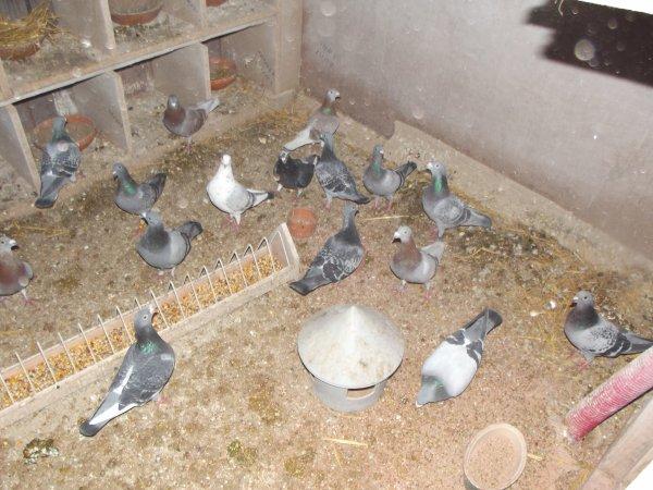 je la totaliter de mer pigeons