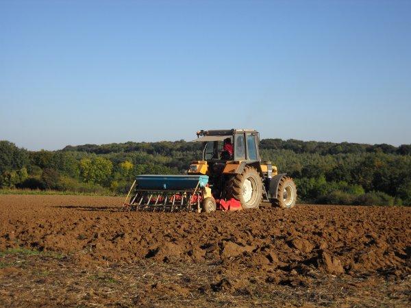 Labour et semis de blé 2010