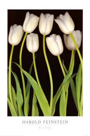 envie d'une tulipe blanche je sais pas pourquoi ses fleurs me fascinent autant....