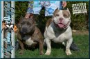 Photo de Rudyshortbully