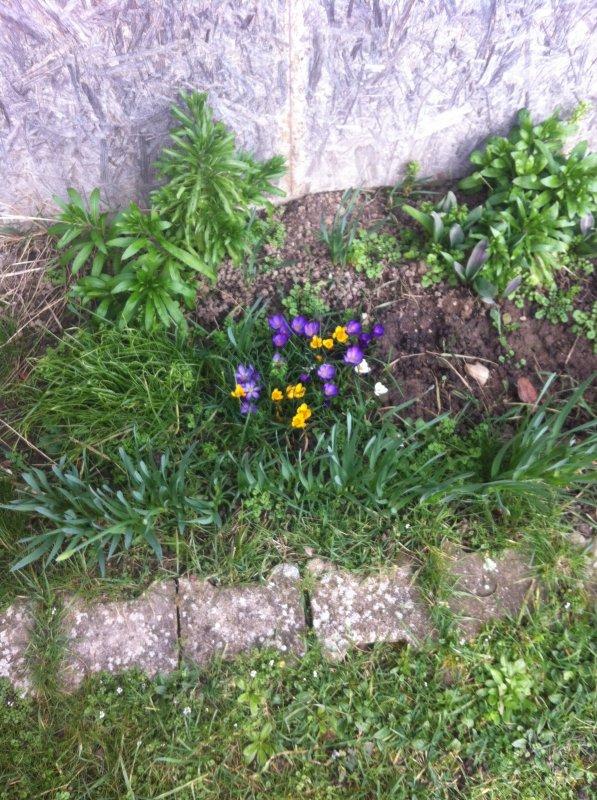 Des fleurs en février???