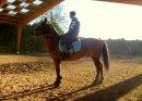 Photo de xx-horse-shop-xx
