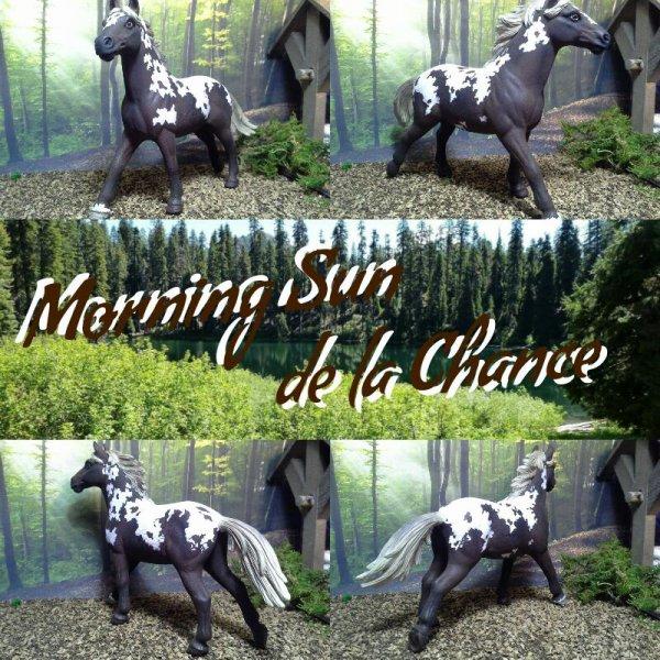 Morning Sun de la Chance