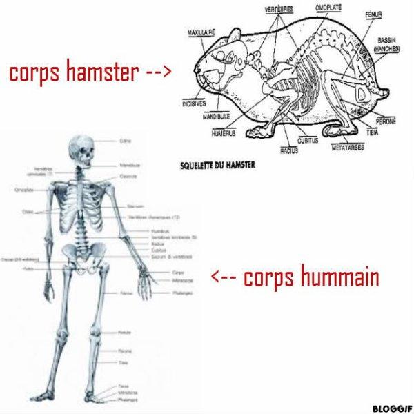 L'Homme et le Hamster ont des points communs...