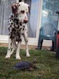 Photo de mon-chien-oliver
