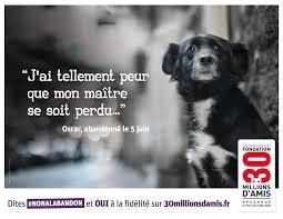 chien abandonné#NONLANBANDON.OUI FIDELITER!!