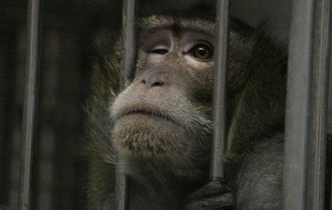 A LA UNENon à l'extension du Centre de primates à Fort Foch !