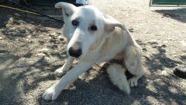 A LA UNE.104 chiens maltraités : le gérant de l'élevage condamné