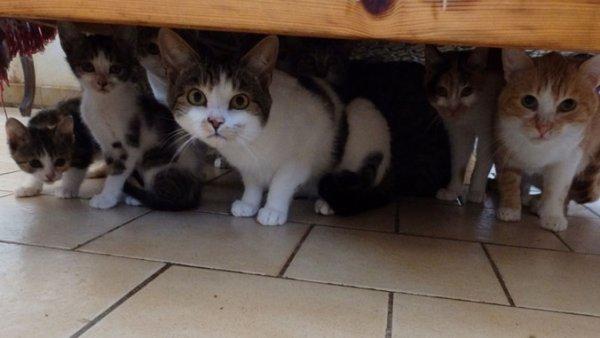 A LA UNE.Une soixantaine de chats à adopter