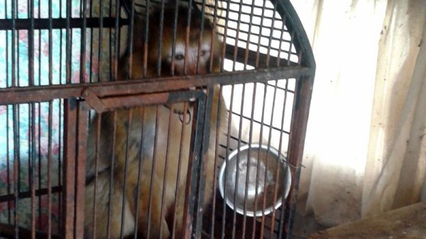 Moky dite « Fifi », une petite femelle magot, a été sauvée par la Fondation 30 Millions d'Amis des terribles conditions dans lesquelles elle vivait à Fontenay-sur-Loing (45).