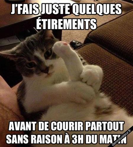 Les Chats ♥