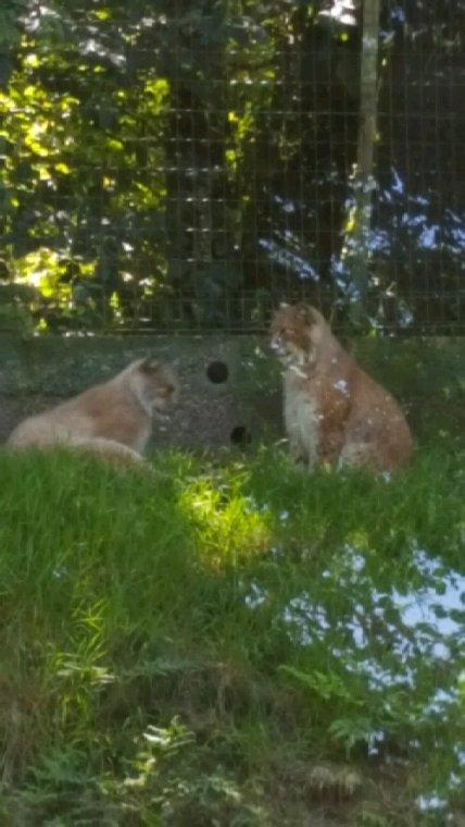 Fetes des pere journee au zoo avec mon papa