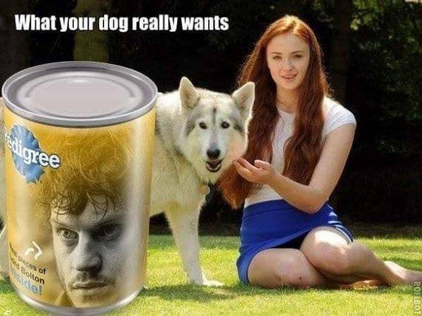 Perso moi j en donnerai pas a mon chien xf