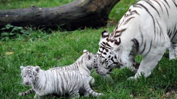Je croise les doigt avec mon père ont doit aller au zoo normalement