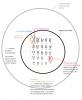 SVT : L'information génétique