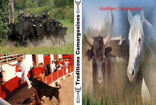 Tradition Camarguaise