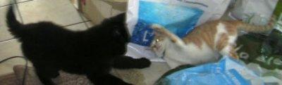mardi 8  fev 2011...a la recherche de photos enfance...et mon poids...reduction necessaire...