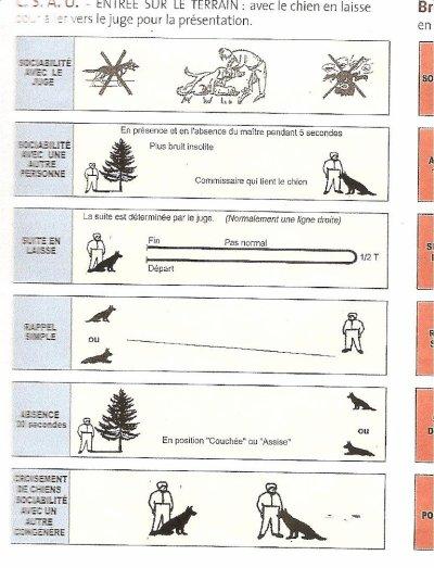 LE TEST CSAU ! certificat sociability...euh...j'ai oubliee A et U mots...