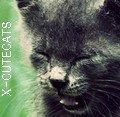 Photo de X-CuteCATS