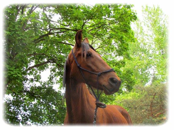 Le respect du cheval, c'est la fondation de la liberté. <3