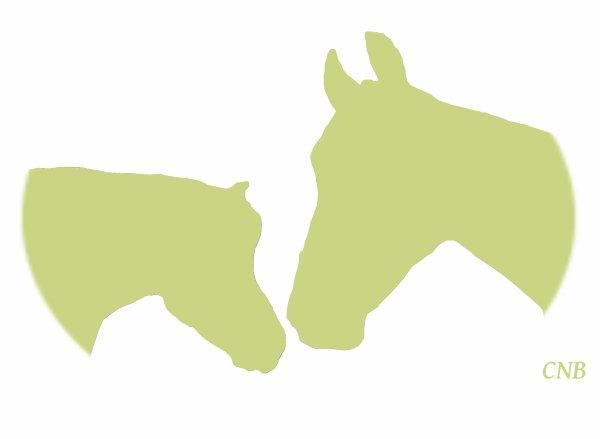 """"""" Le cheval ne nous appartient pas. La seule chose que nous possédons, c'est le devoir de nous en occuper correctement"""""""