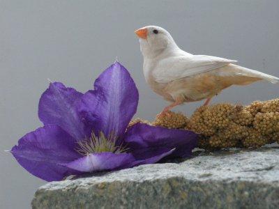 photo femelle Isabelle brune