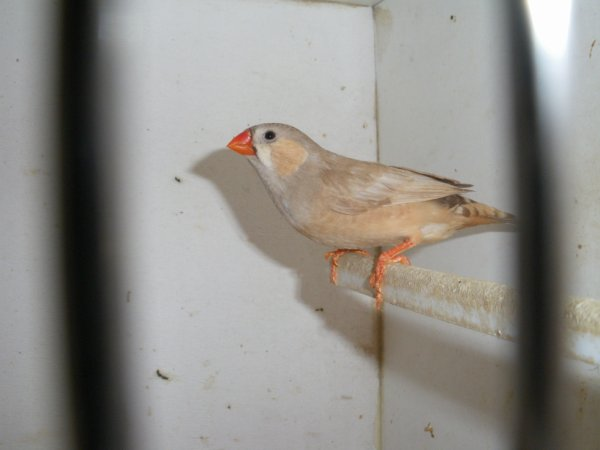 femelle brune po/pn