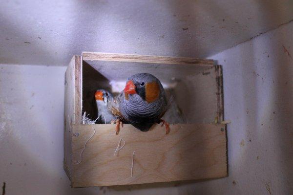 les nid sont bien integré