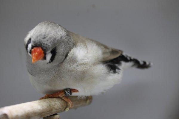une jeune dos pale grise
