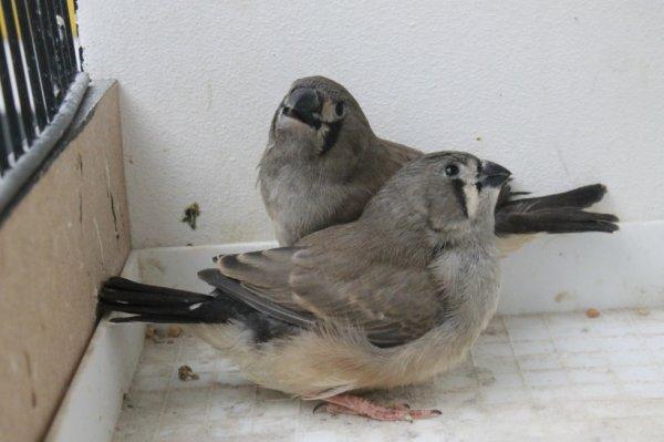 2 gris