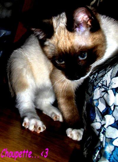 Mon amour de chat...♥♥♥
