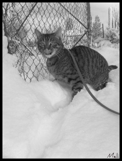 Chapitre six : Winter