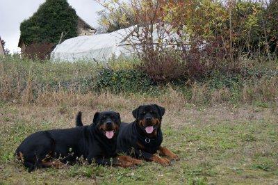 Akina et Brutus.....